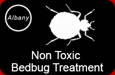 Non Toxic Bedbug Treatment