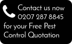 Pest Control & Prevention in London